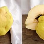 Fruit of Aphrodite, Goddess of Love