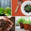 Sydney Green Villages Seed to Plate Workshops
